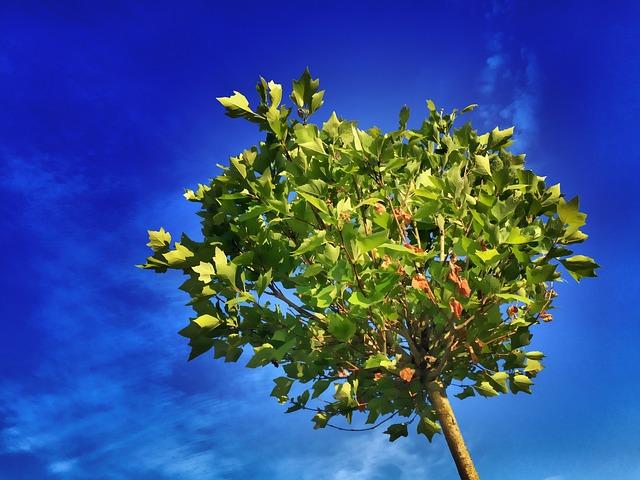 Bomen kopen nabij Geertruidenberg? Kom naar GroenRijk Oosterhout!