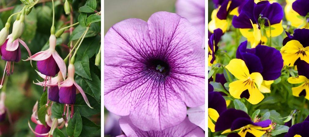 Eenjarige planten | Perkplanten | Perkgoed | Tuincentrum Oosterhout