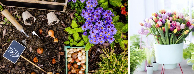 Bloembollen en zaden kopen bij GroenRijk Oosterhout