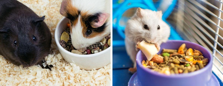 Alles voor knaagdieren vindt u in de dierenwinkel van GroenRijk Oosterhout