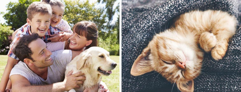 Alles voor uw huisdier vindt u bij GroenRijk Oosterhout