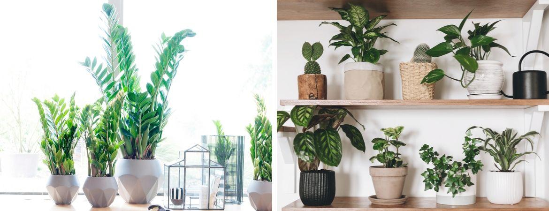 Groene kamerplanten kopen bij GroenRijk Oosterhout