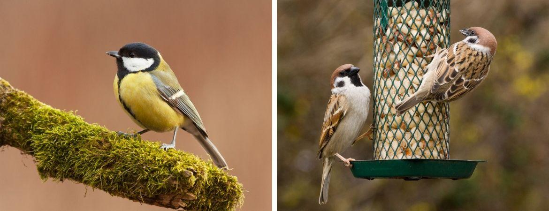Vogels in de tuin - GroenRijk Oosterhout