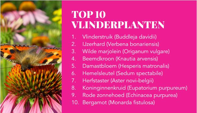 Vlinders in de tuin GroenRijk Oosterhout