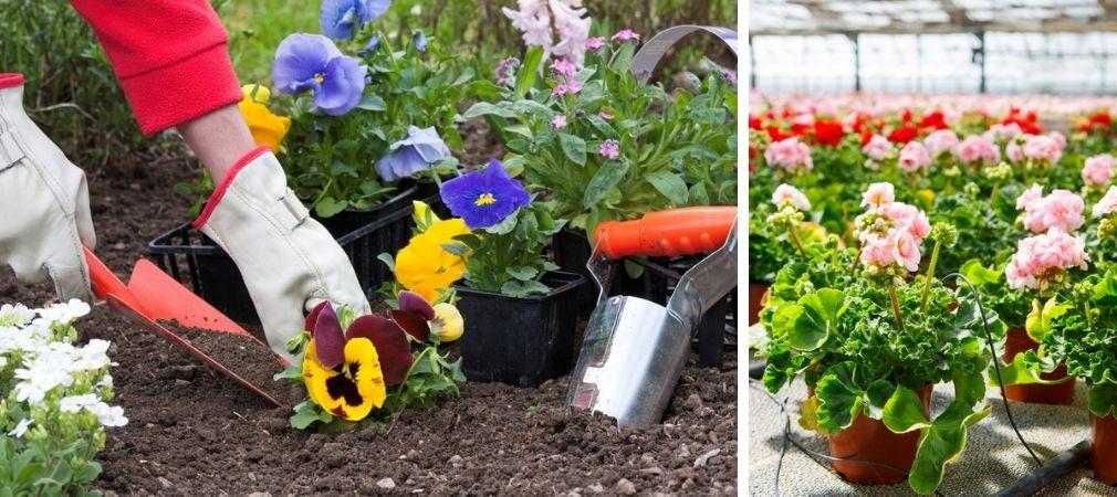 Eenjarige planten | Perkgoed | Perkplanten | Tuincentrum Oosterhout