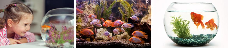 Vissen kopen | GroenRijk Oosterhout