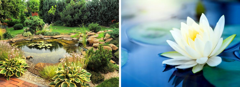 waterplanten-kopen-oosterhout