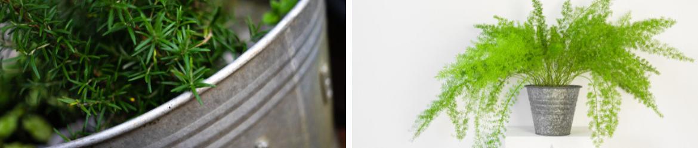 Zinken bloempotten bij GroenRijk Oosterhout